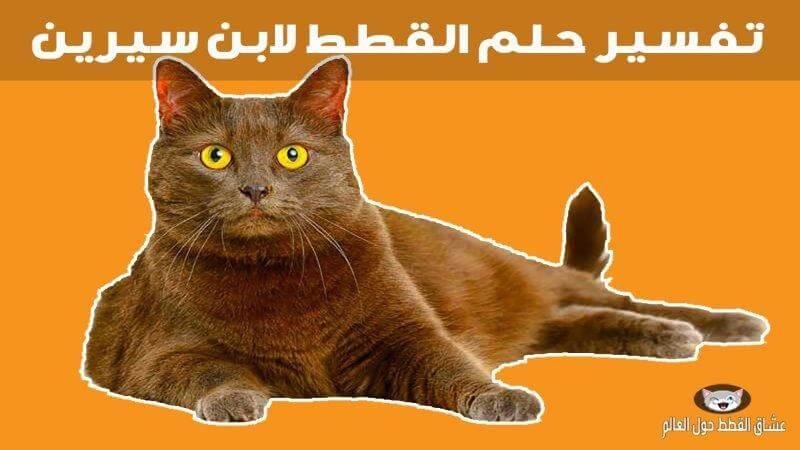 19a1aafe2 تفسير حلم القطط لابن سيرين ورؤية كل أنواع القطط - عشاق القطط حول العالم