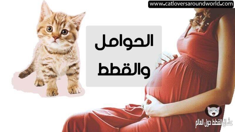 رؤية القطط في المنام للحامل تفسيرها و أسبابها بالتفصيل عشاق القطط حول العالم